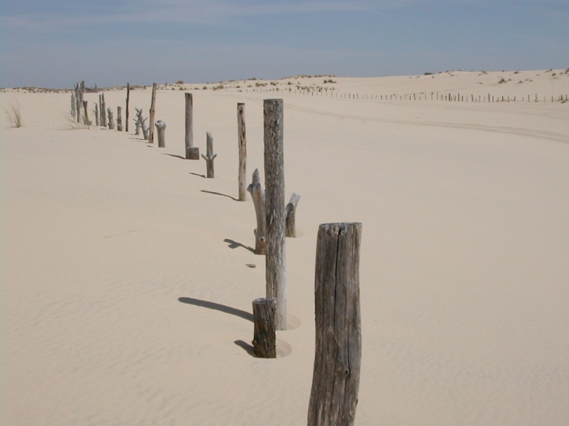 Imagen del Parque Nacional de Doñana