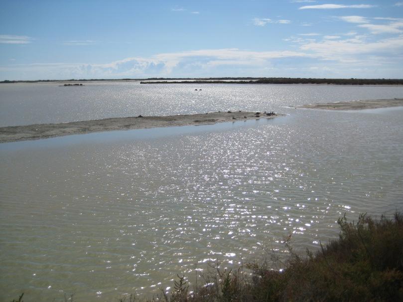 Imagen del Parque Natural de la Bahía de Cádiz
