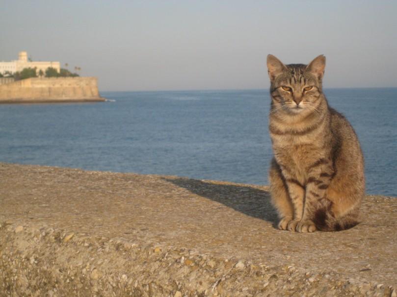Imagen de la sombra de un gato de Cádiz