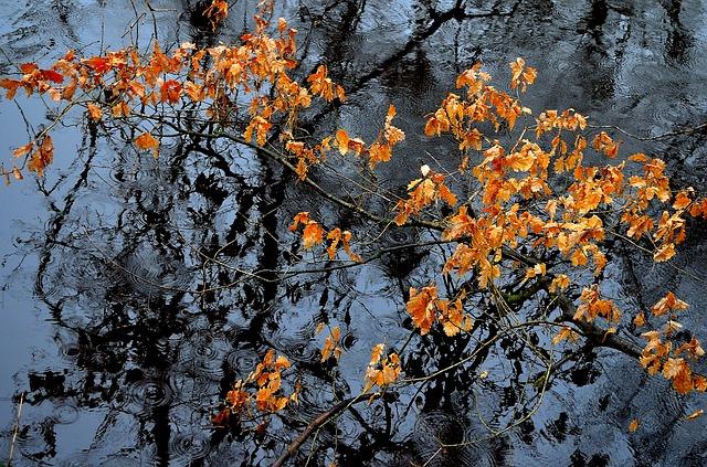 Imagen de hojas de otoño