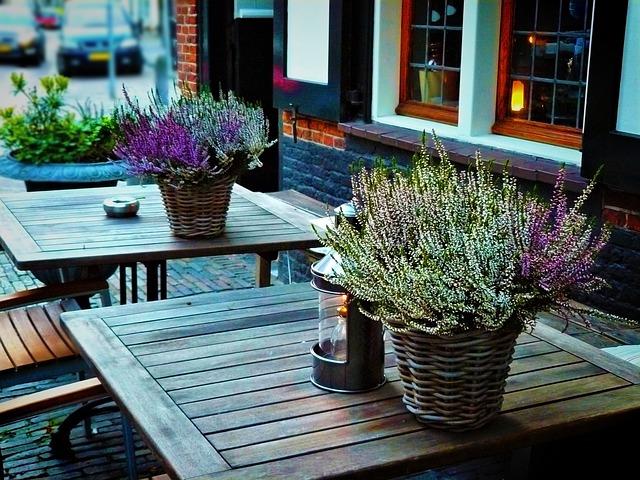 Imagen de flores de invierno