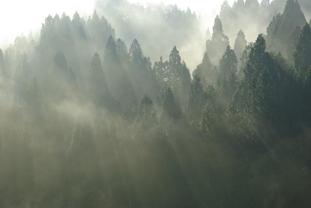 Imagen de mountain pines