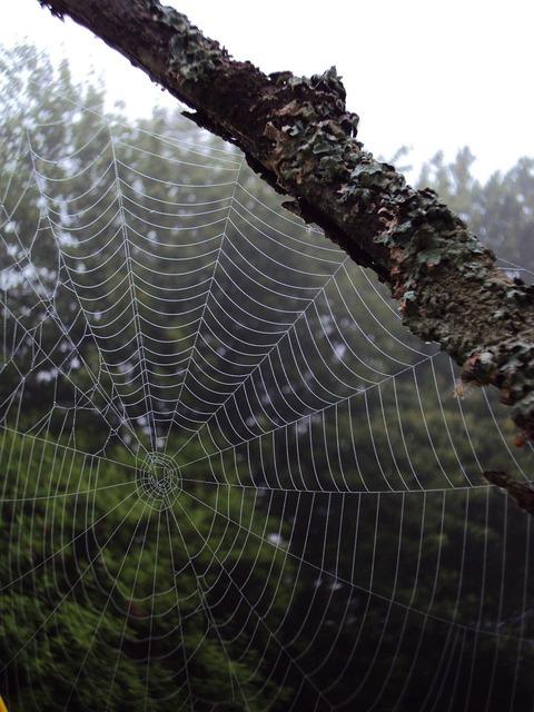 Imagen de spider net