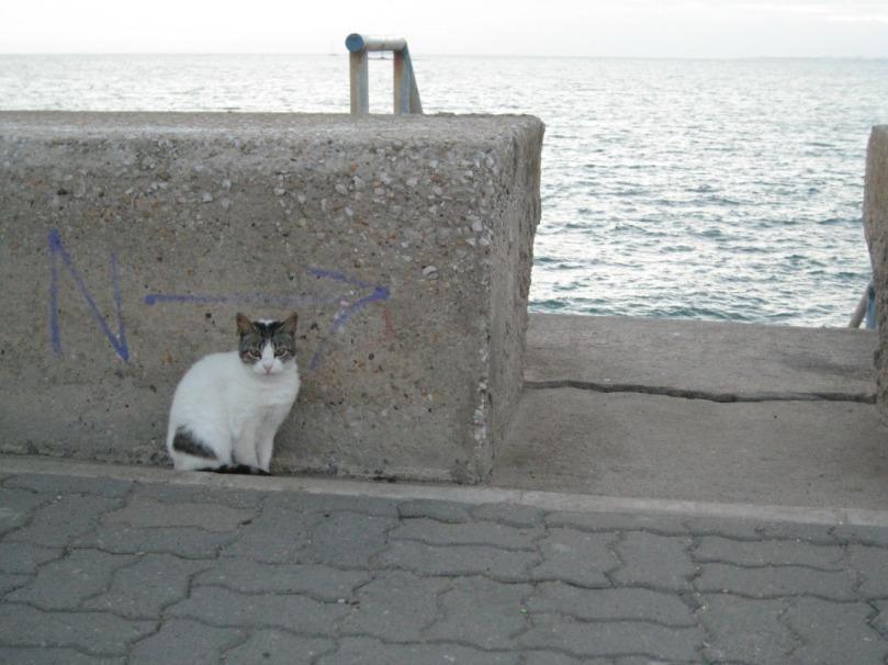 Imagen de un gato callejero