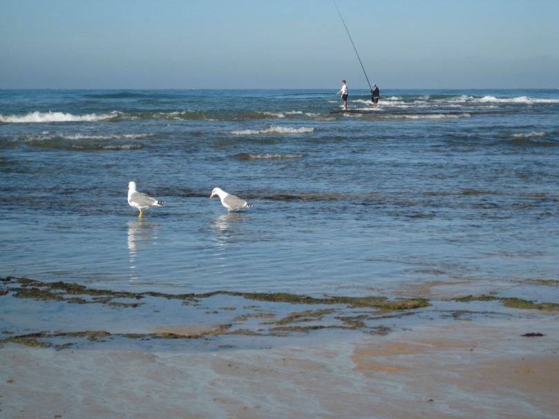 Imagen de pesca en Cadiz