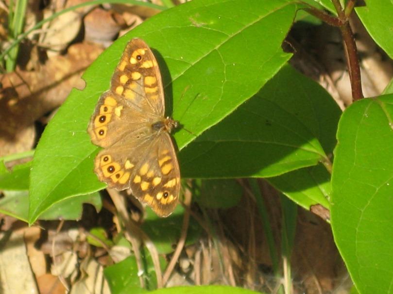 Imagen de una mariposa de otoño