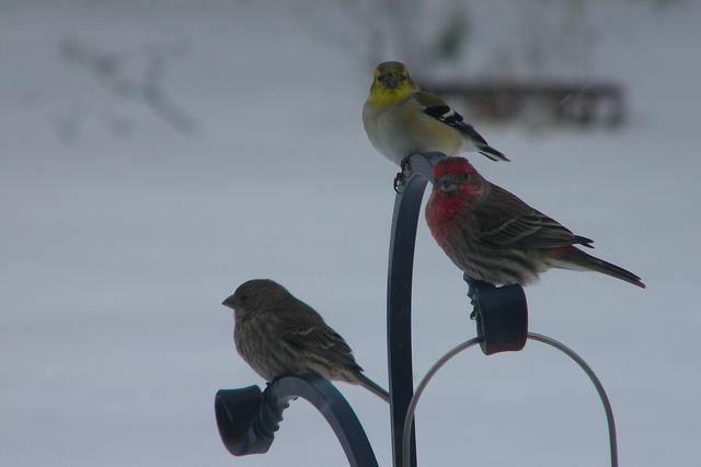 Imagen de pájaros en la nieve