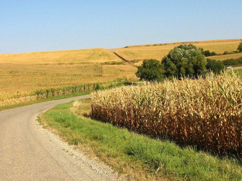 Corn road