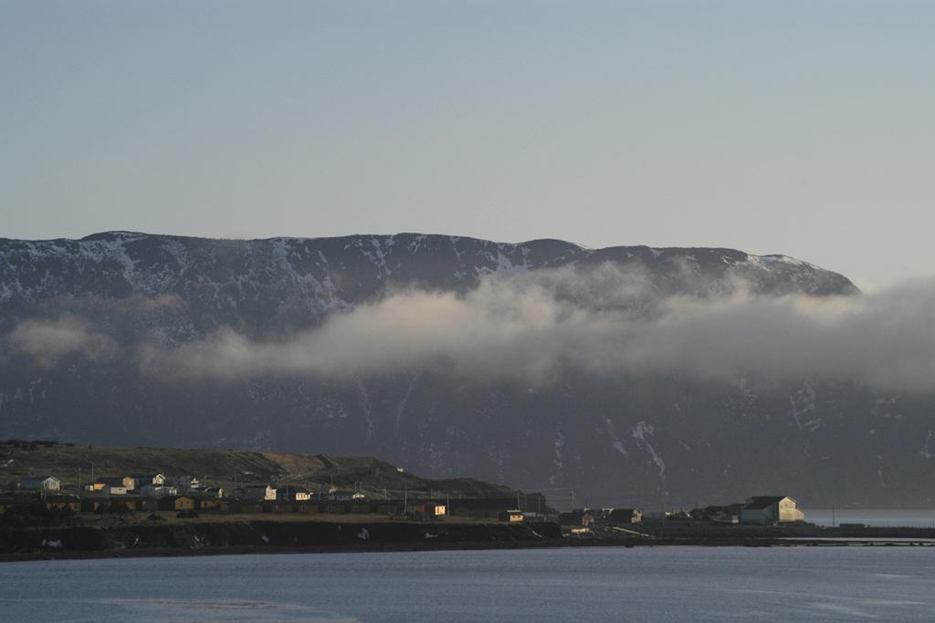 Image of Golden wisps in Newfoundland